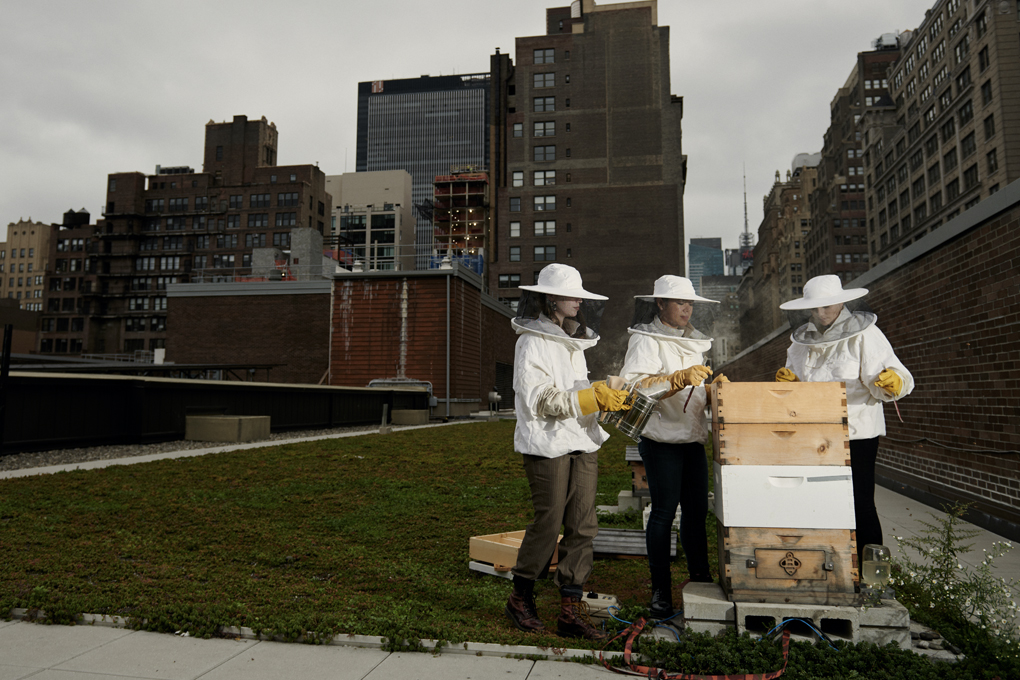 The Bee Conservancy's Bee Sanctuary at Fashion Institute of Technology Roof Garden