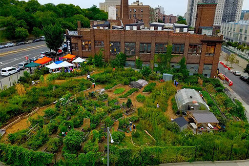 The New Roots Farm South Bronx Bee Conservancy Sanctuary